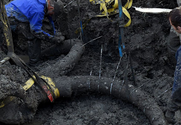 A Farmer Dug Up Ancient Woolly Mammoth Bones With His Tractor UNILAD famer web4
