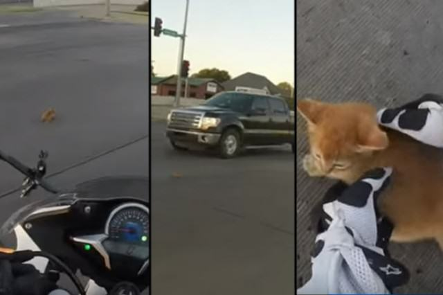 Daring Motorcyclist Rescues Kitten At A Busy Intersection UNILAD featkitten85228 640x426