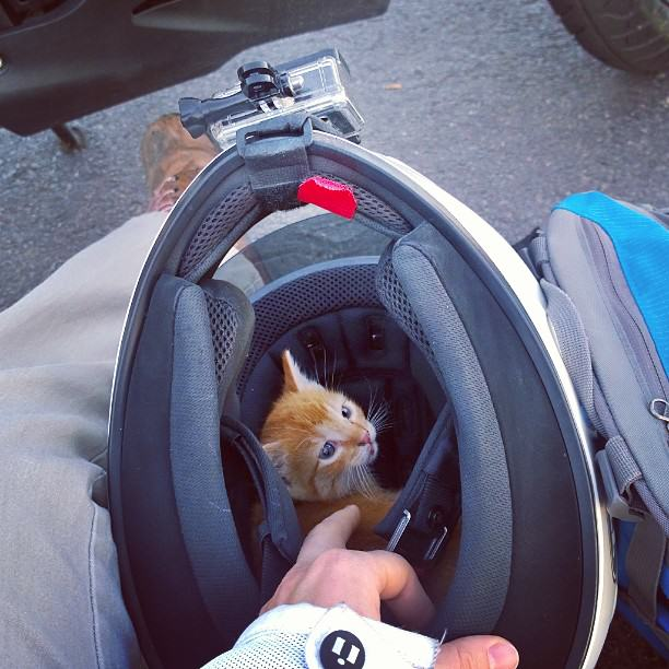 Daring Motorcyclist Rescues Kitten At A Busy Intersection UNILAD kitten in helmet53673