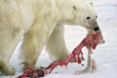 Heres What It Would Look Like To Be Eaten By A Polar Bear UNILAD polar bear eats baby cub 042