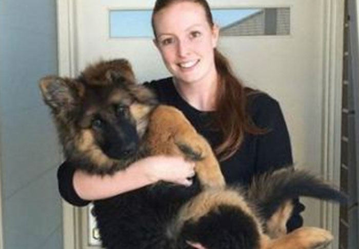 Series Of Photos Chart German Shepherd Puppys Insane Growth Over Six Months UNILAD pup35