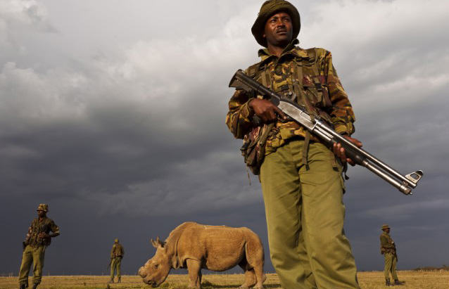 Kenya Want To Fast Track Laws Handing Poachers The Death Penalty RHINO11