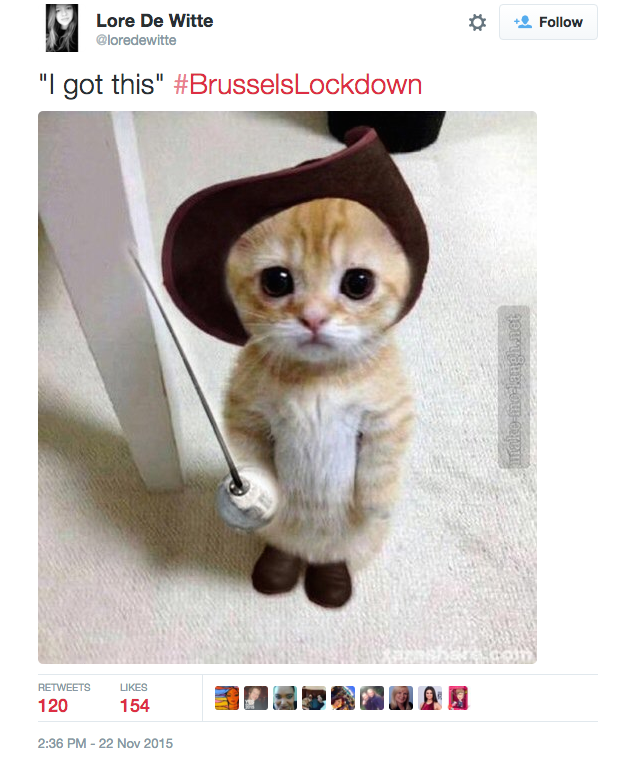 Belgians React Brilliantly To Terror Raids By Posting Pictures Of Cats Screen Shot 2015 11 23 at 11.12.30