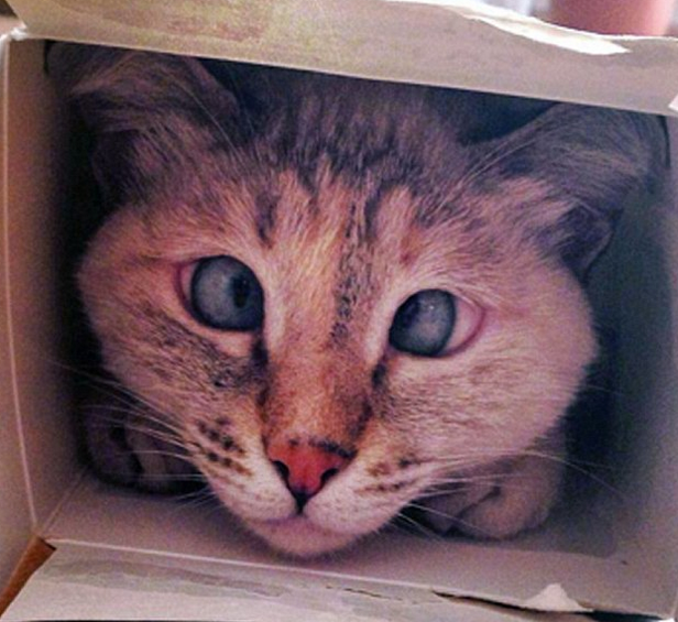 Cross Eyed Cat Found Abandoned In The Street Becomes Internet Sensation Screen Shot 2015 11 30 at 20.18.03