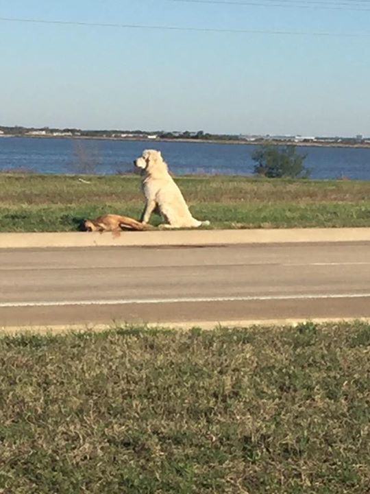 Heartbreaking Photo Shows Loyal Dog Refusing To Leave His Dead Friends Side UNILAD 183594