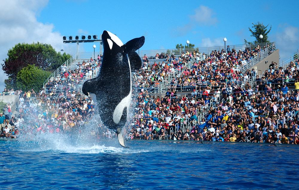 Killer Whale Shows To Be Phased Out At SeaWorld UNILAD 2009 Seaworld Shamu8336