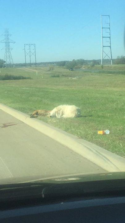 Heartbreaking Photo Shows Loyal Dog Refusing To Leave His Dead Friends Side UNILAD 232490