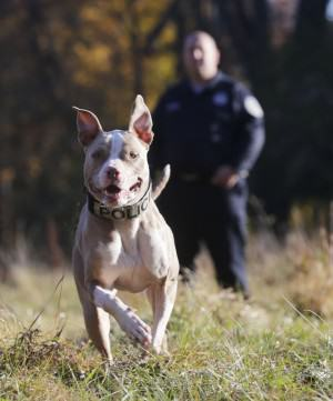 History Made As Rescue Dog Becomes First Ever NYPD K9 Pit Bull