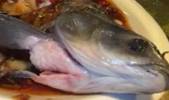 Weird Zombie Fish Comes Back To Life After Being Cooked UNILAD Fish video 61109426405