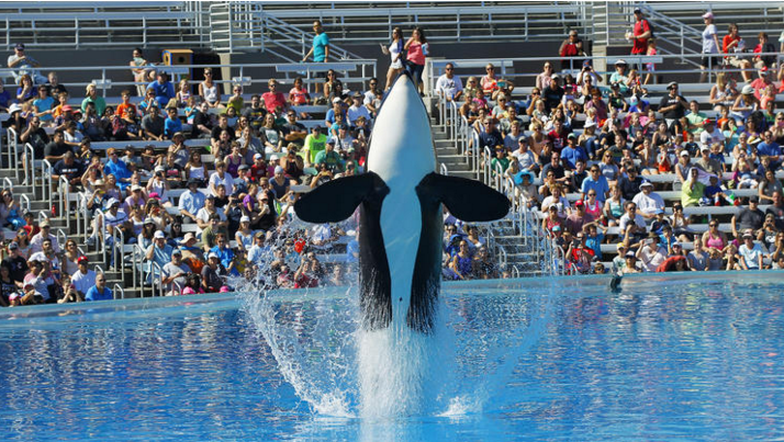 Killer Whale Shows To Be Phased Out At SeaWorld UNILAD Screen Shot 2015 11 10 at 12.45.00 pm17601