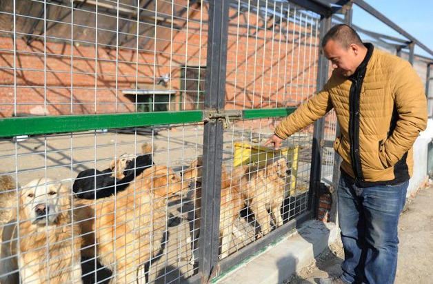Millionaire Goes Broke Saving Hundreds Of Dogs From Slaughterhouse UNILAD Screen Shot 2015 11 20 at 10.39.4367779