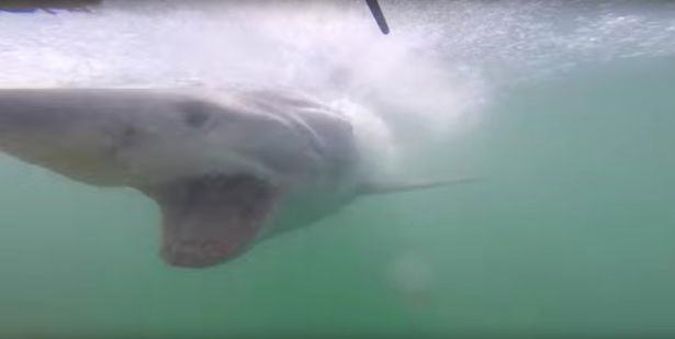 Watch This Shit Scary Footage Of A Tourist Nearly Getting Eaten By A Shark UNILAD Shark crashes into diving cage 263381