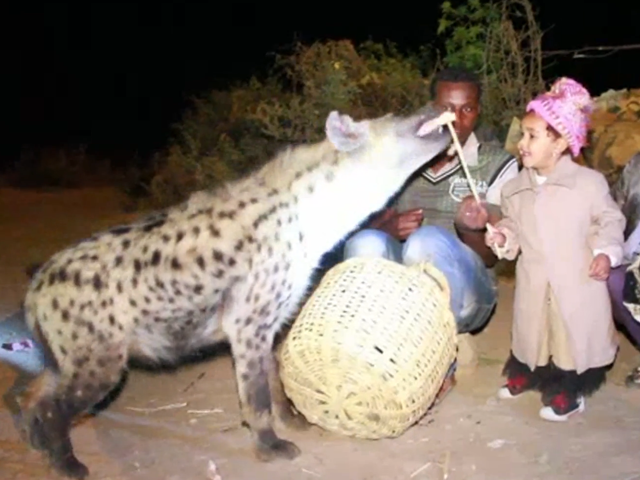 Video Shows Ethiopian City Where Kids Feed And Befriend Wild Hyenas UNILAD afp34939