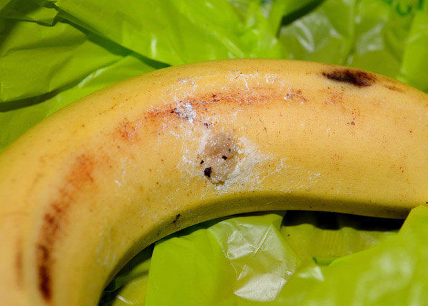 UK Mum Finds Spider That Can Kill In Two Hours In Her Bananas UNILAD banana 33609641642