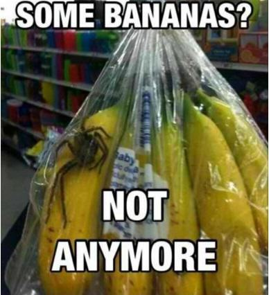 UK Mum Finds Spider That Can Kill In Two Hours In Her Bananas UNILAD banana44542