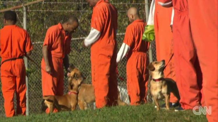 Prisoners Have Been Given Dogs As Cell Mates And The Results