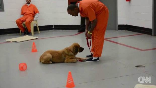Prisoners Have Been Given Dogs As Cell Mates And The Results Are Extraordinary UNILAD dog prisoners 237207