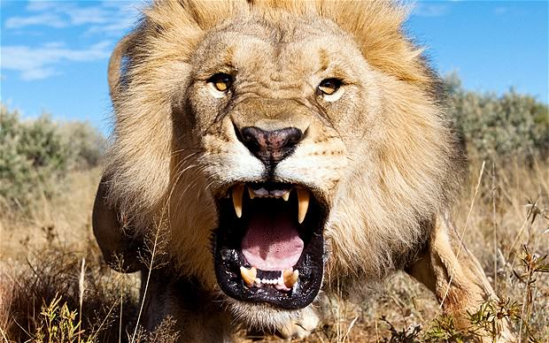 These Are The Top 10 Deadliest Animals In The World UNILAD li 1890322b137