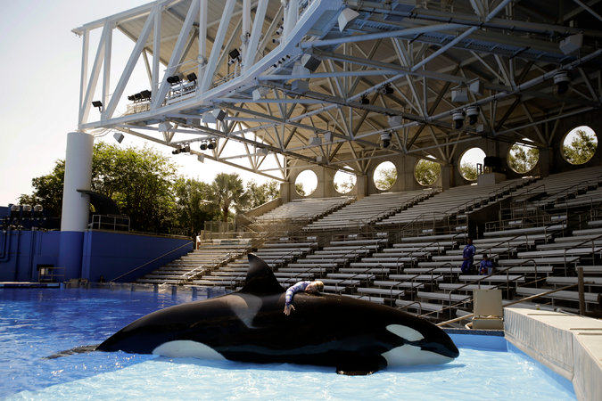 Killer Whale Shows To Be Phased Out At SeaWorld UNILAD seaworld179117