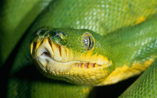 These Are The Top 10 Deadliest Animals In The World UNILAD snake82734