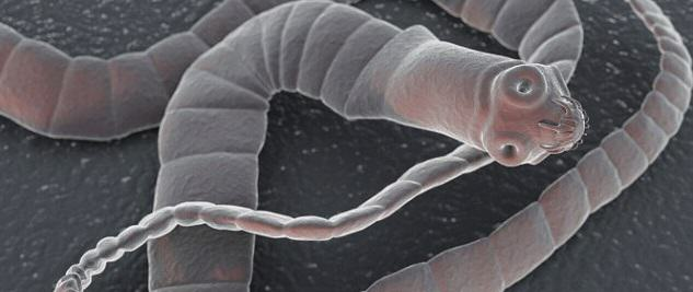 These Are The Top 10 Deadliest Animals In The World UNILAD tapeworm99366