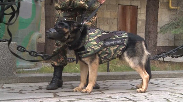 Russian Police Dogs To Be Fitted With Armour After Paris Attacks dog1