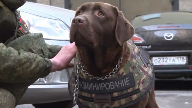 Russian Police Dogs To Be Fitted With Armour After Paris Attacks dog2