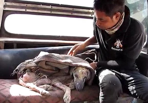 Miraculous Recovery Of Dog Who Turned To Stone Because Of Mange mange dog WEB