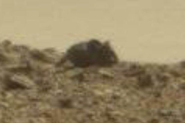Giant Mouse And Monkey Spotted On Surface Of Mars, Apparently mouse monkey mars 1
