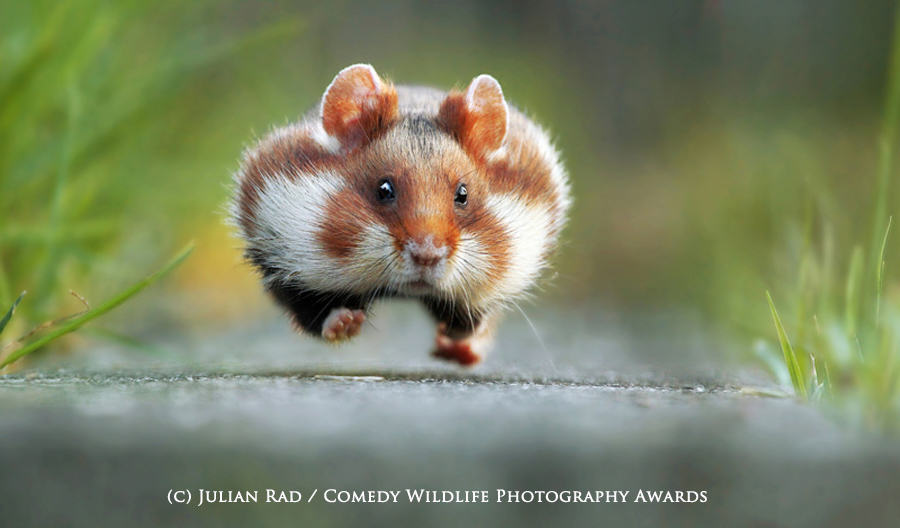 The Winners Of The 2015 Comedy Wildlife Photography Awards Have Been Revealed wildlife awards 1