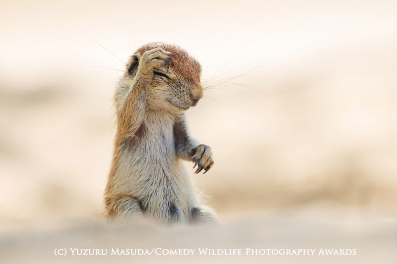 The Winners Of The 2015 Comedy Wildlife Photography Awards Have Been Revealed wildlife awards 11