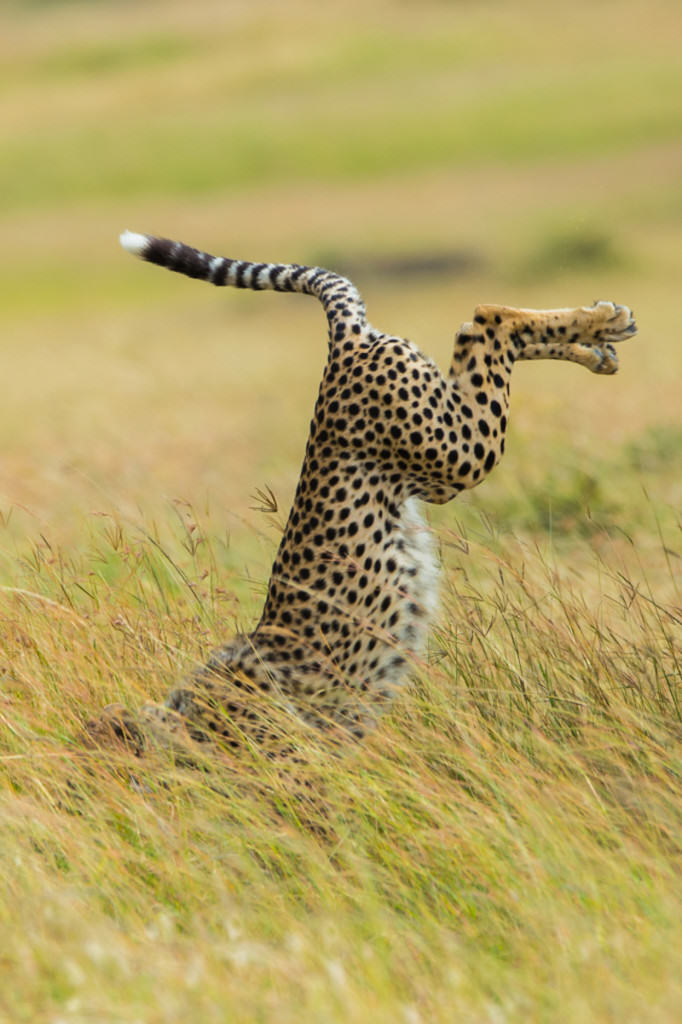 The Winners Of The 2015 Comedy Wildlife Photography Awards Have Been Revealed wildlife awards 13