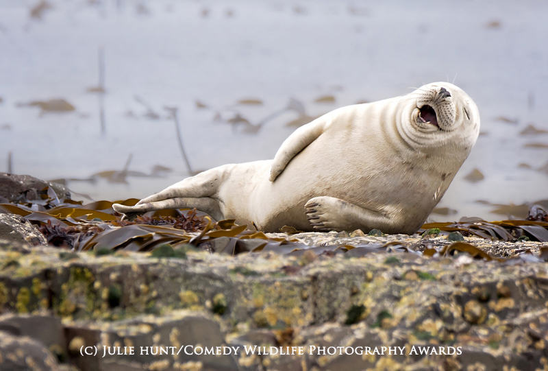 The Winners Of The 2015 Comedy Wildlife Photography Awards Have Been Revealed wildlife awards 7