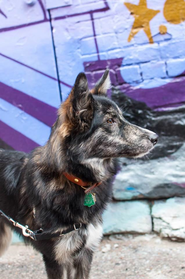 Awesome Pictures Of Show Rescue Dogs Whose Lives Have Been Transformed 12341582 1715990511967396 3926482336253200856 n