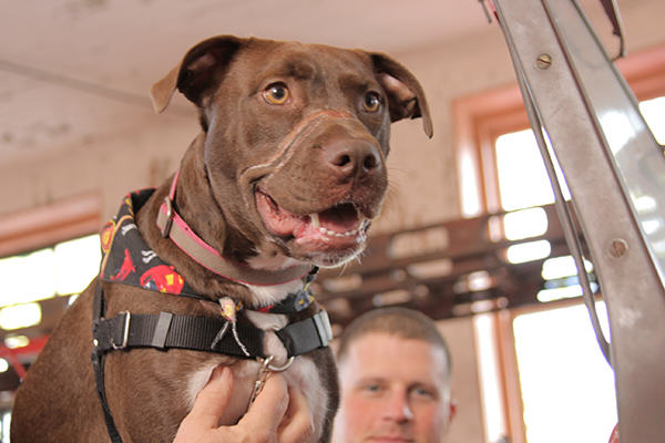Caitlyn The Abused Dogs Amazing Day Following Recovery IMG 5174 600x400 1