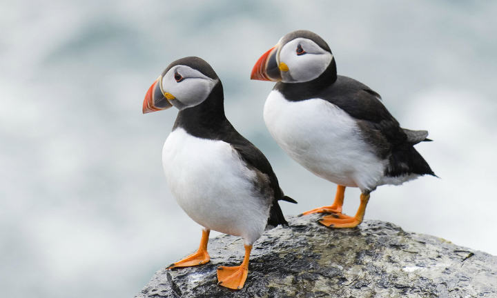 Very Odd, Very NSFW Joke Brings Internet Together On Christmas Day Puffins