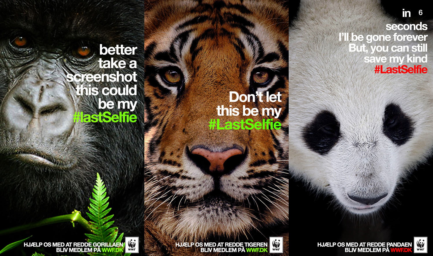 When Social Media Is A Force For Good WWF LastSelfie20140415040638