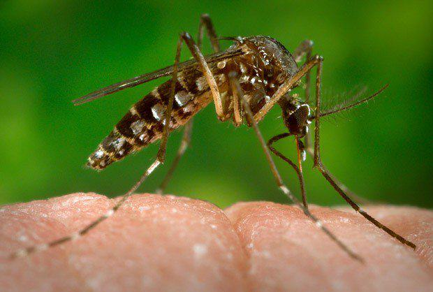 Doctors Warn Women In Brazil Dont Get Pregnant aedes aegypti