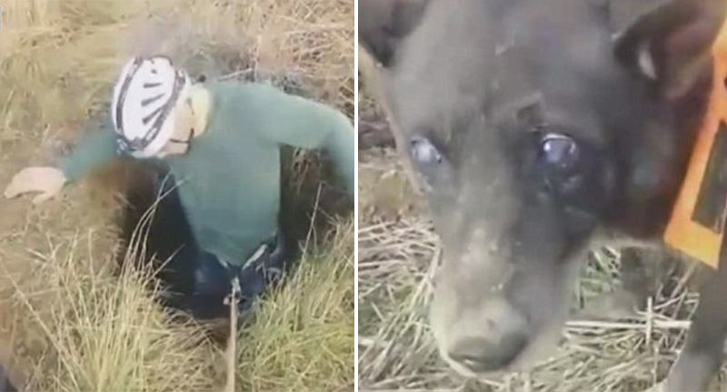 Amazing Moment Dog Who Fell Down Well Rescued In Time For Christmas dog well FB