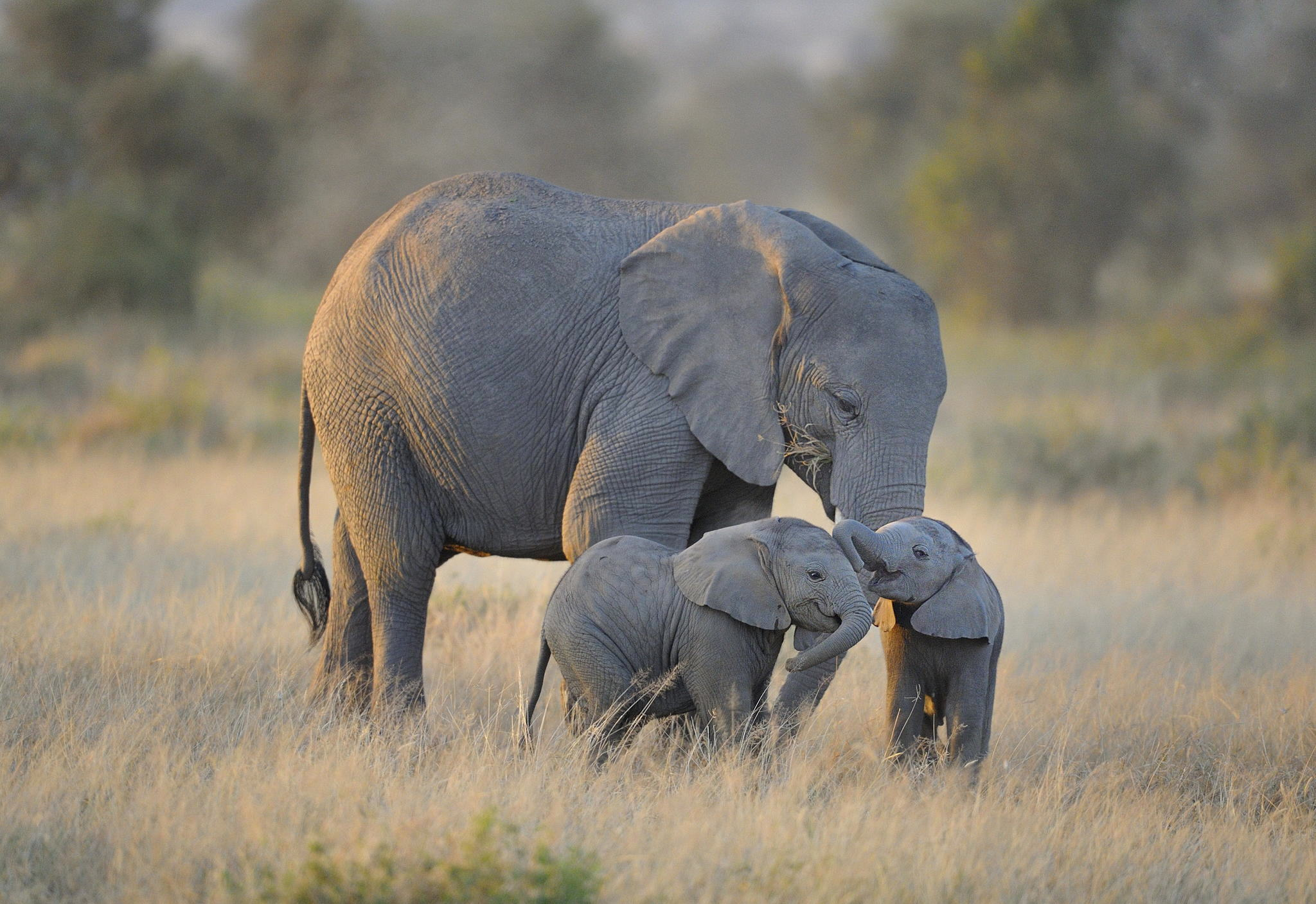 Hunter Crushed To Death By Baby Elephant He Tried To Kill elephant5