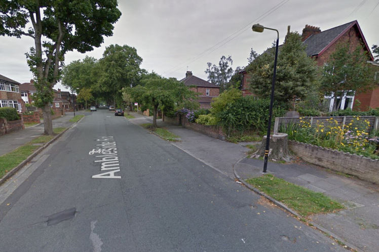 Hero Dog Saves Woman From Would Be Sex Attacker flixton