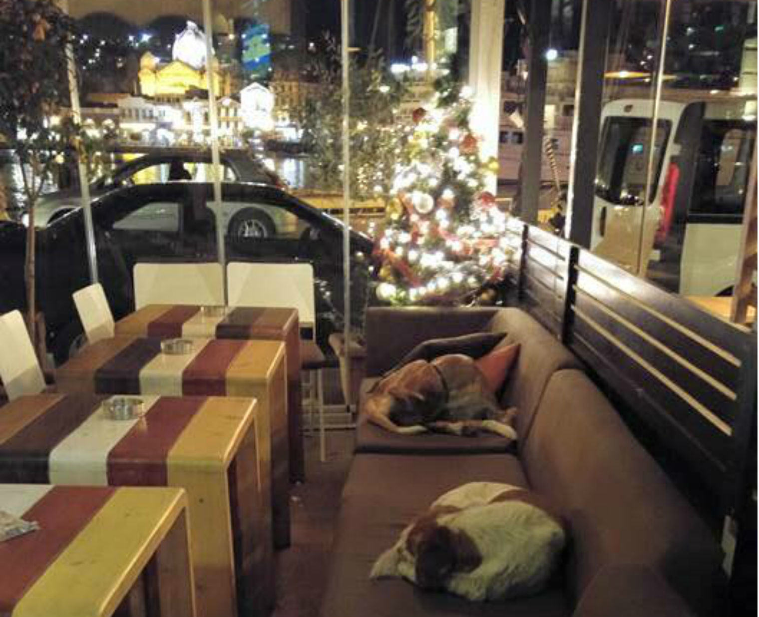A Café In Greece Opens Its Doors To Stray Dogs Every Night greece strays 1
