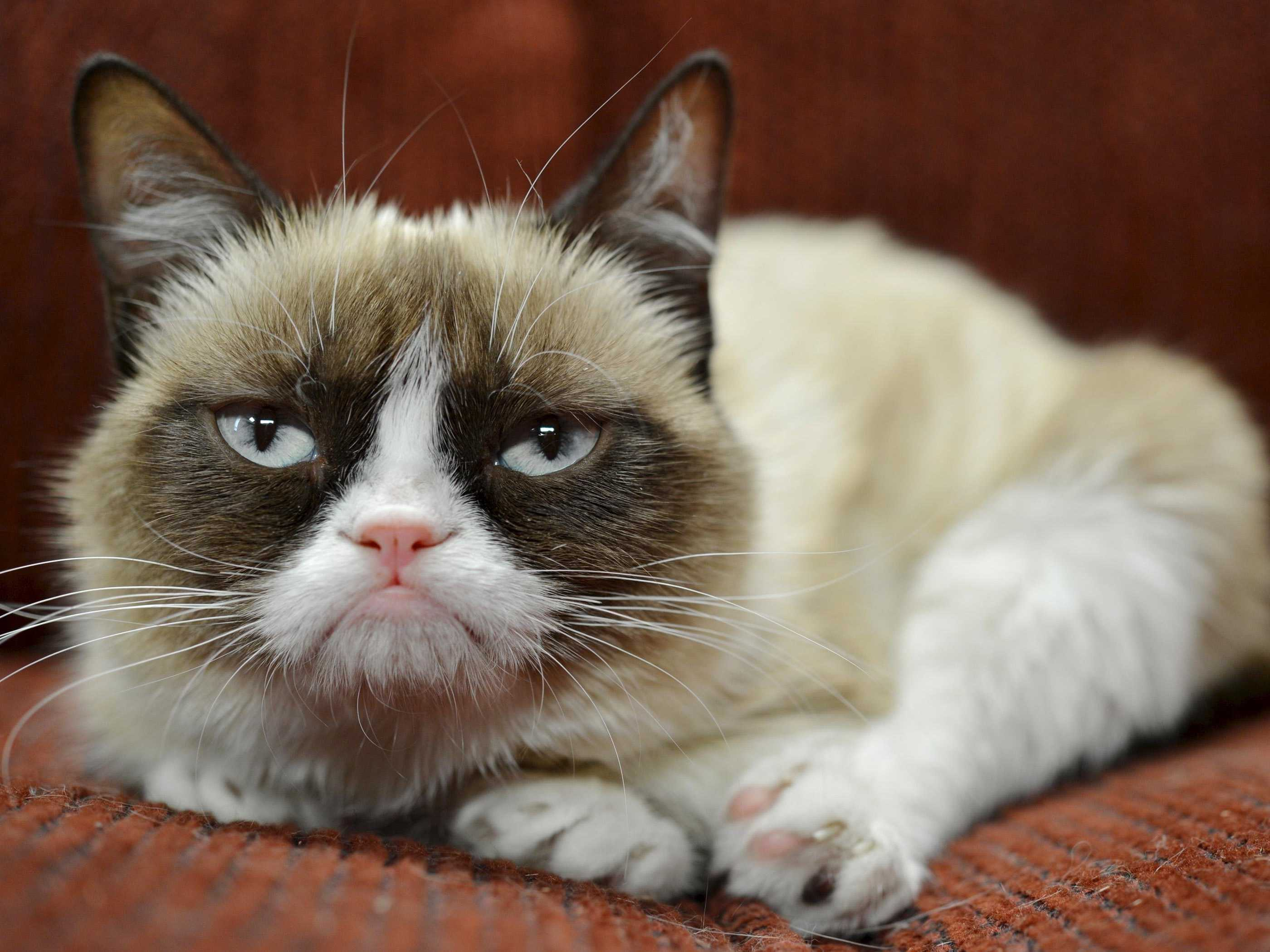 Researchers Have Some Good News For People Who Hate Everything grumpy cat has earned her owner nearly 100 million in just 2 years