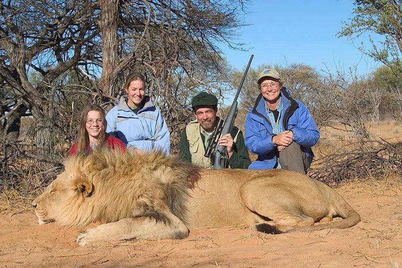 Two Sub Species Of Lion Have Been Added To The Endangered Species List lion 5b