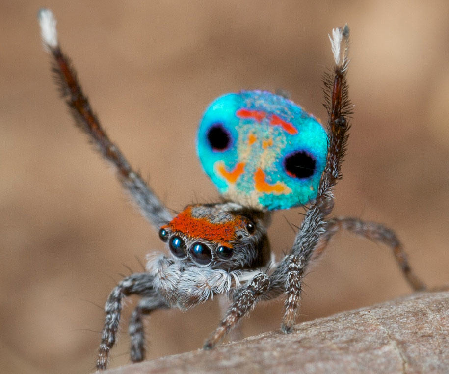 These Weird Animals Were All Discovered This Year peacockspider