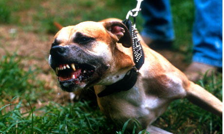 The Extent Of Horrific Illegal Dog Fighting In The UK Revealed