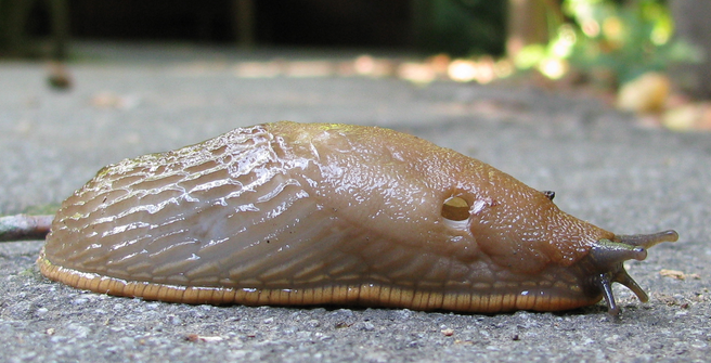 Five Aliens From Star Wars That Basically Exist In Real Life slug 0