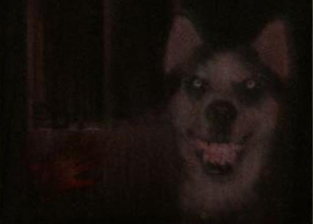 Seven Internet Bogeymen That Have Terrified People The World Over smile dog