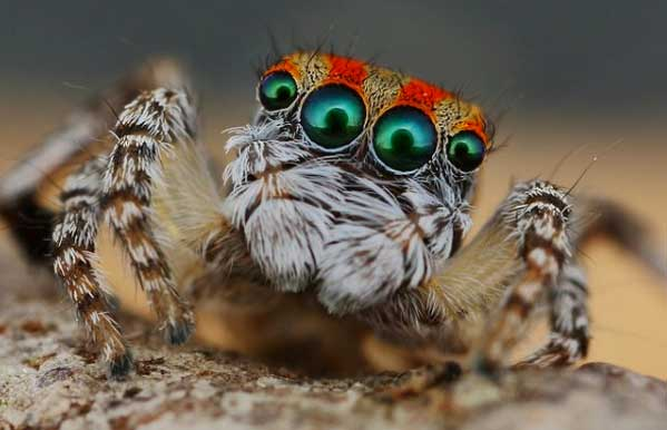 These Weird Animals Were All Discovered This Year spider44