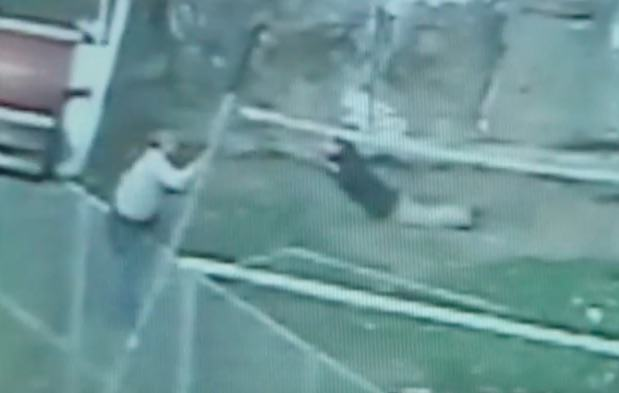 Close Call As Human Sack Of Spuds Jumps Into Tiger Enclosure tiger2